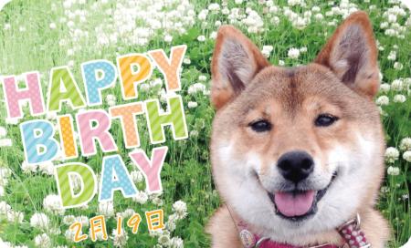 2月19日は看板犬「つくし」の誕生日